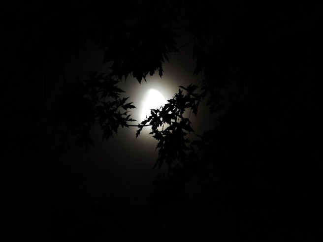 moonlight-through-trees-1616303_1280